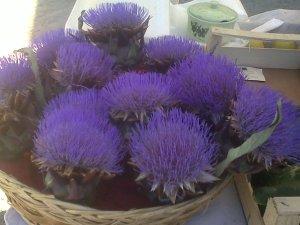 fiori di carciofo